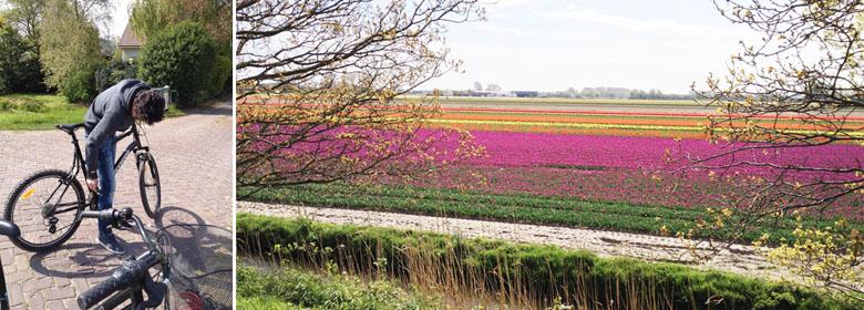 Fleurs hollande keukenhof for Jardin keukenhof 2015