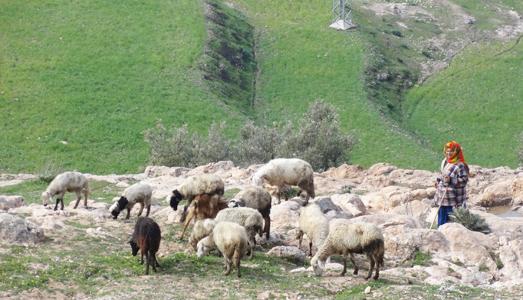 plaine d'Alhaouz.
