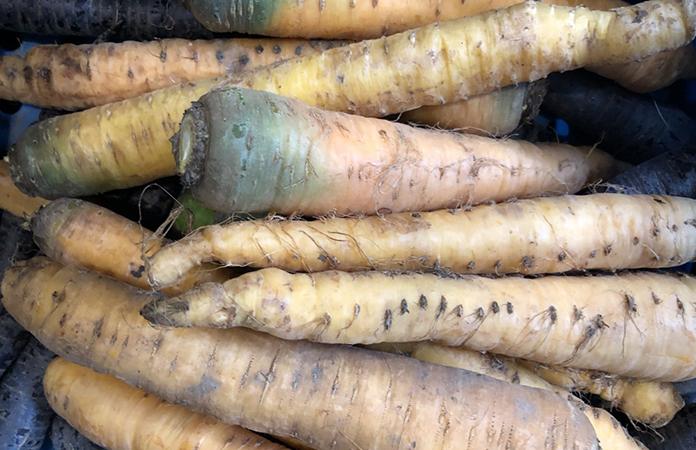 Le panais, légumes d'hiver