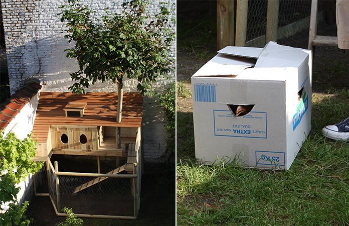 Osez les poules en ville | Dans un jardin bruxellois...