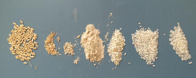 De la rizière au risotto