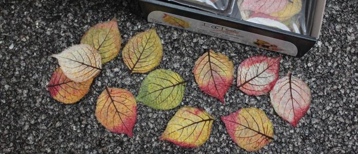 mdh-feuilles