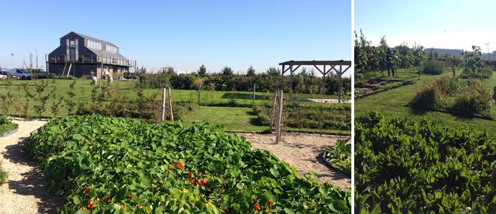 TomateCerise-Le-petit-marseillais-jardin