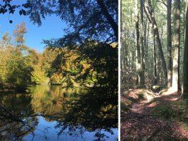 Balade dans les bois de la forêt de Soignes à Groenendael