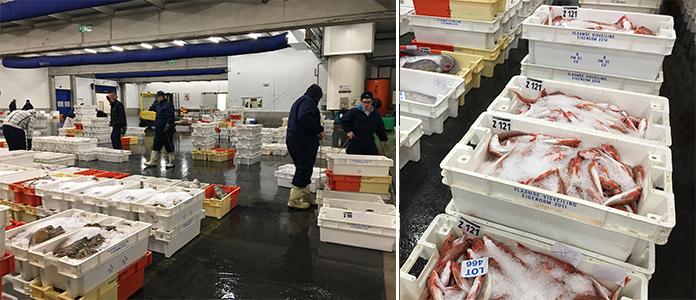 Le poisson sur les étals belge, visite de la criée à Zeebrugge