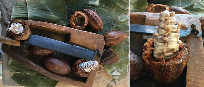 Le chocolat Beanology | De la fève au cacao par Callebaut