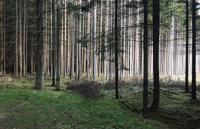 Rensiwez   Une nuit dans une cabane au milieu des bois