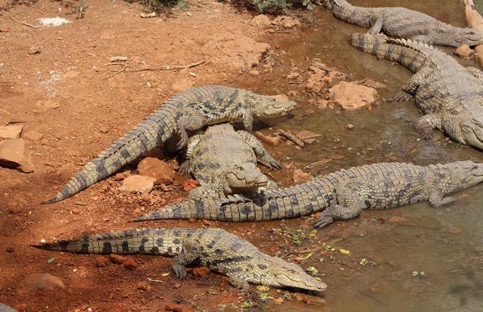 réserve naturelle de Bandia