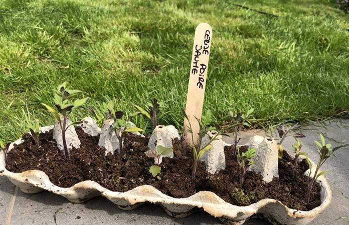 semer ou planter