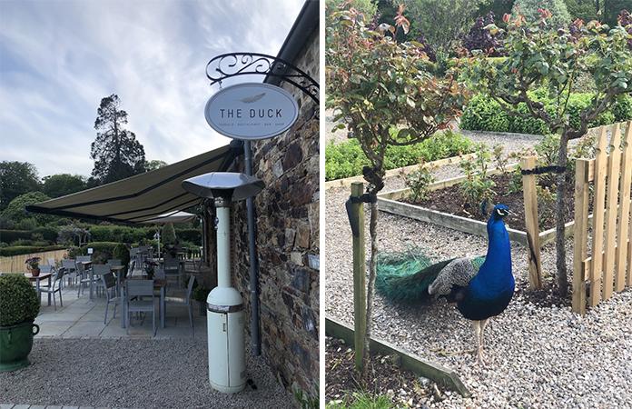 The duck restaurant Irlande