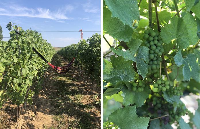 vigne wallonie